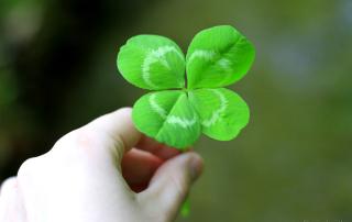 four_leaf_clover